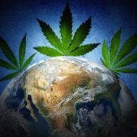Marijuana's History: How One Plant Spread Through the World | Live Science