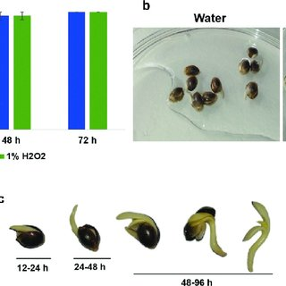 Germination of cannabis seeds in 1% hydrogen peroxide solution and...    Download Scientific Diagram