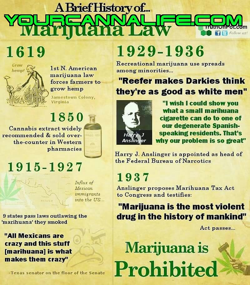 WHY IS CANNABIS ILLEGAL? | YourCannaLife
