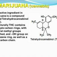 Option D Medicine and Drugs HL - ppt video online download