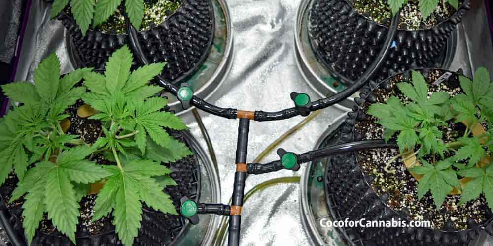 Guide to Automatic Watering for Indoor Cannabis - Watering For Indoor  Cannabis - Coco For Cannabis