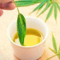 How To Make Cannabis-Infused Olive Oil - Zamnesia Blog