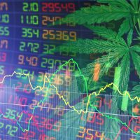 Are Cannabis Stocks the Hot Stocks for 2021?   Wealth Within