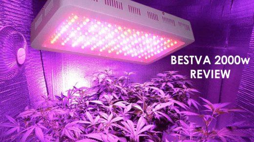 BESTVA 2000W LED Grow Light Review + All Specs [2020]