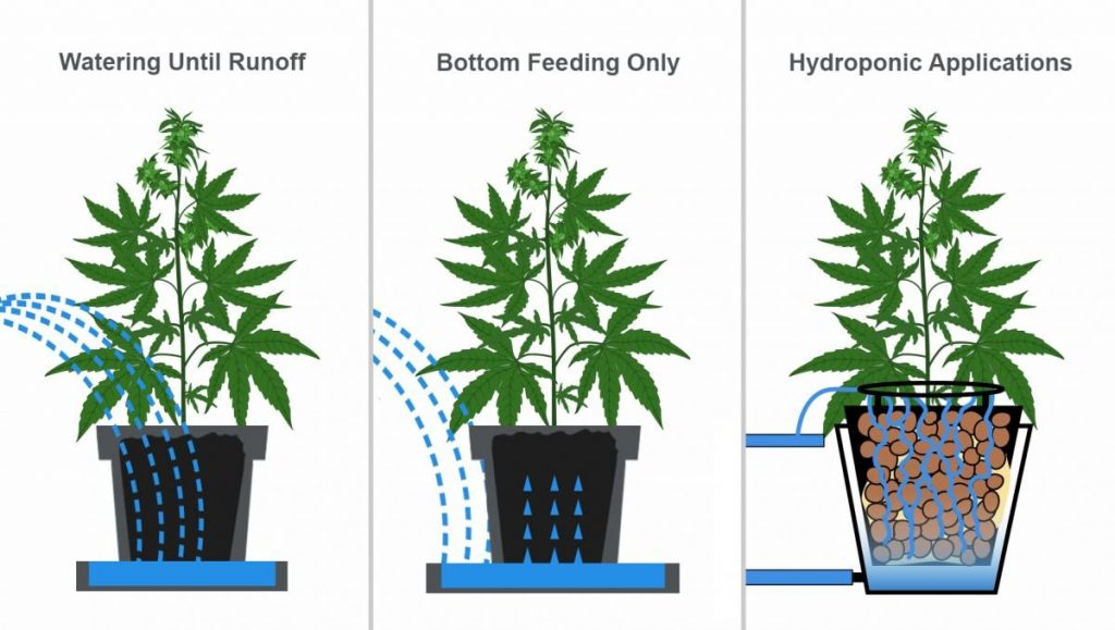 How Often Should I Water My Cannabis Plants?   Fast Buds