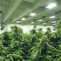 How to Invest in Marijuana Stocks - SmartAsset