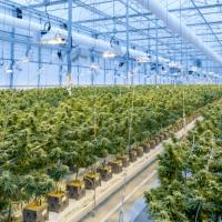 How to invest in marijuana stocks   Article   DEGIRO