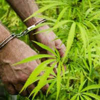 Illegal Marijuana Sites Can't Hide from Science   USDA