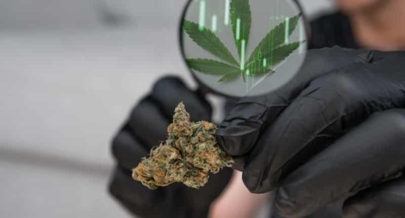5 Smoking-Hot Cannabis Stocks to Buy Right Now | InvestorPlace