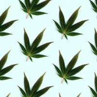 How to Invest in Cannabis (Without Buying Cannabis Stocks)   Kiplinger