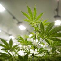 Three Reasons Marijuana Stocks Are Hot Right Now   The World Financial  Review