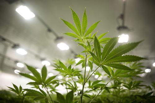 Three Reasons Marijuana Stocks Are Hot Right Now | The World Financial  Review