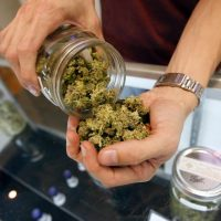 Recreational Weed: How Much Does Marijuana Cost in California?