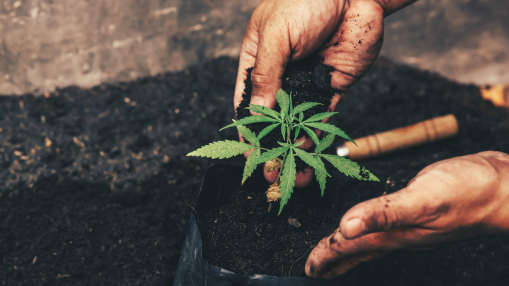 7 Marijuana Stocks That Could Still Go Down in Flames | InvestorPlace