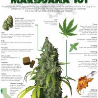 Cannabis Kingdom