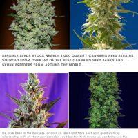Buy Cannabis Seeds Online UK by sensibleseeds - issuu
