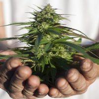 How to Get a Permit to Grow Medical Marijuana in California? - Marijuana  Investor Summit WCP2018