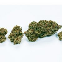 How Much Is A Gram? Visual Guide To Cannabis Amounts   Green Flower