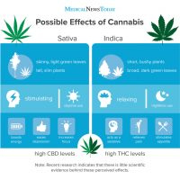Indica vs. sativa: What's the difference?