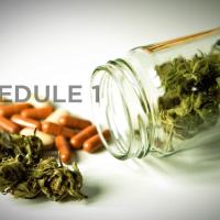 Schedule 1 Drugs: Marijuana Debate | D'Amore Mental Health