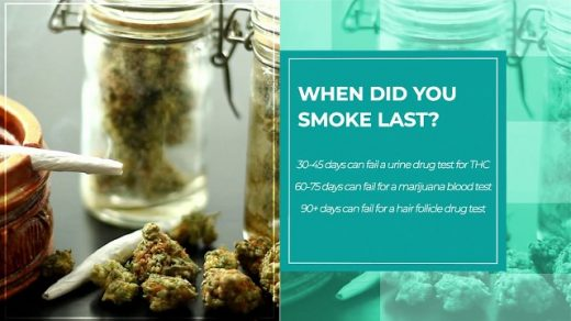 How Long Does Marijuana Stay in Your System (Urine and Hair Test)?