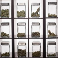 Colorado is making so much money from cannabis it's having to give some  back to citizens | The Independent | The Independent